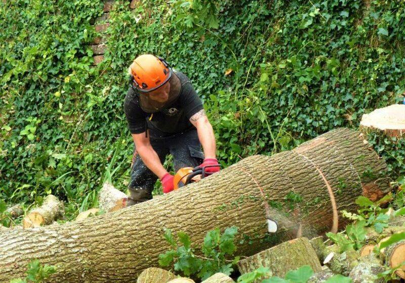 tree surgery fife